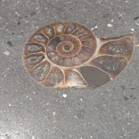 336 Ammonite Detail Within Outdoor Concrete Counter Top
