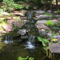 561 Waterfall with Fish Pond