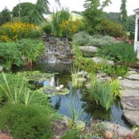 Waterfall and Fish Pond